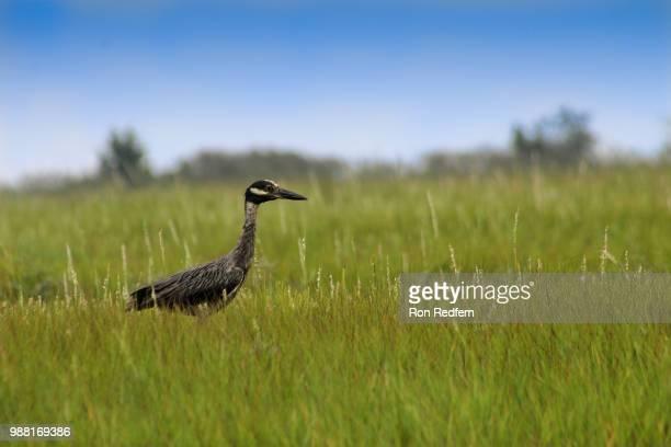 Wetland Bird