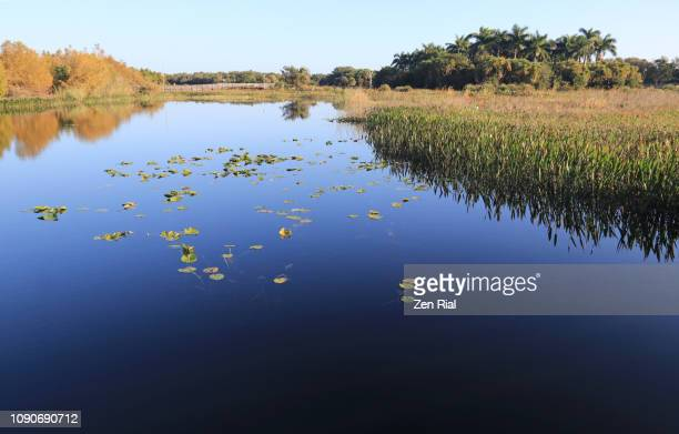 wetland in a nature preserve in south florida - green cay - freshwater stock pictures, royalty-free photos & images