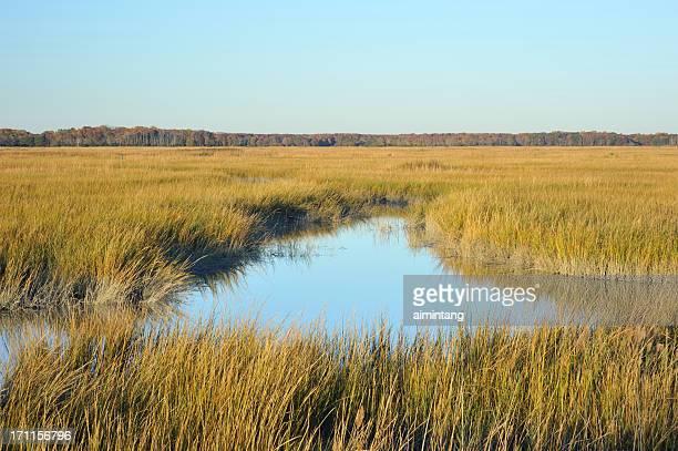 Wetland in Delaware