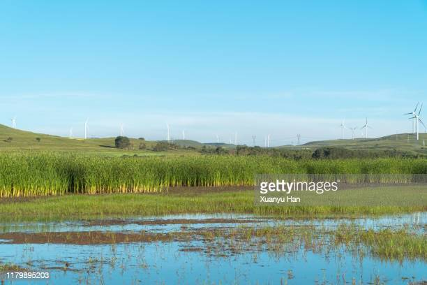 wetland landscape - hebei province stock pictures, royalty-free photos & images