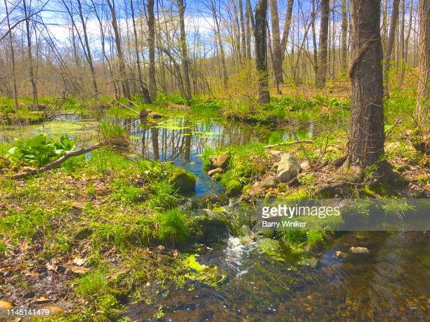 wetland near ghent, new york - barry wood stock pictures, royalty-free photos & images