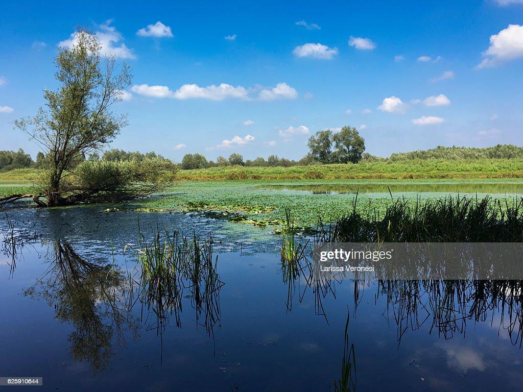Wetland of the Lonjsko Polje Nature Park, Croatia : Stock Photo