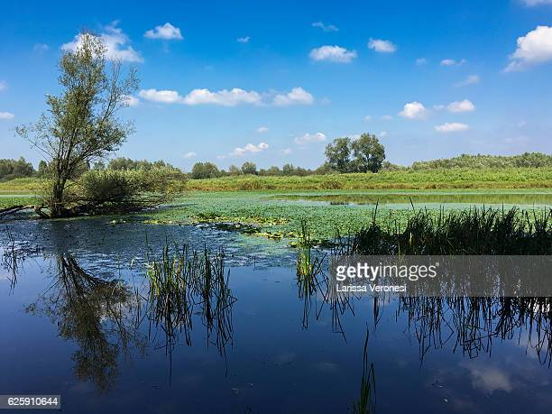 wetland of the lonjsko polje nature park, croatia - larissa veronesi stock pictures, royalty-free photos & images