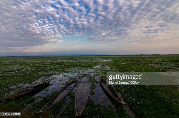 wetland - monsoon stock pictures, royalty-free photos & images