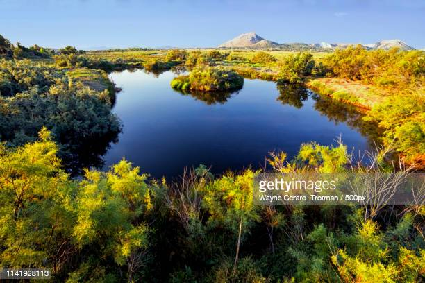 wetland - wayne gerard trotman stock pictures, royalty-free photos & images