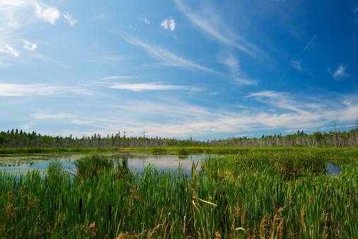 wetland 157396755