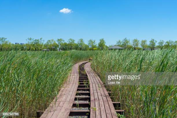 wetland road - liyao xie stock pictures, royalty-free photos & images