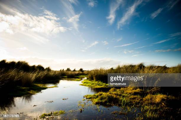 Wetland swamp with tufts of grass in early morning light
