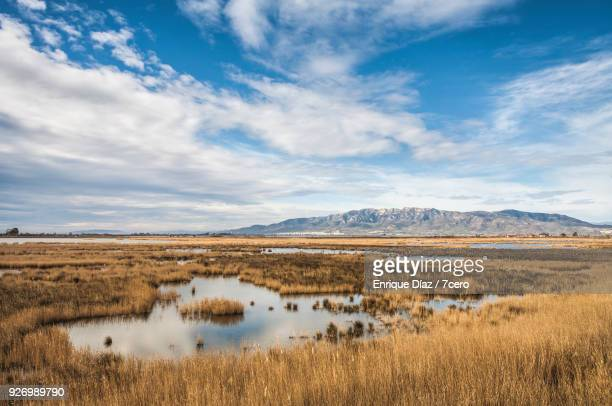 wetlands at the ebro delta - ebro river stock photos and pictures