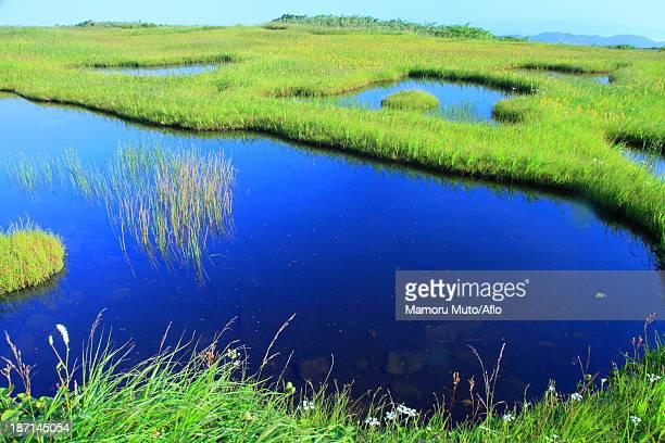 wetlands in higashitagawa county, yamagata prefecture - 山形県 ストックフォトと画像
