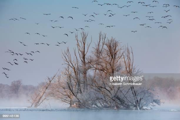 wetlands on the danube river in winter, ingolstadt, bavaria, germany - インゴルシュタット ストックフォトと画像