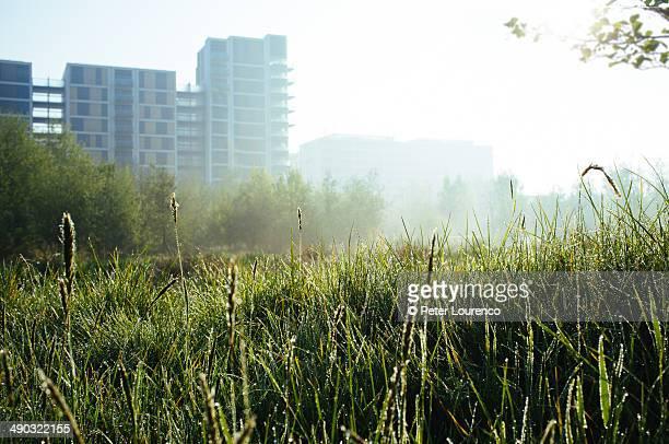wetlands - peter lourenco stock-fotos und bilder