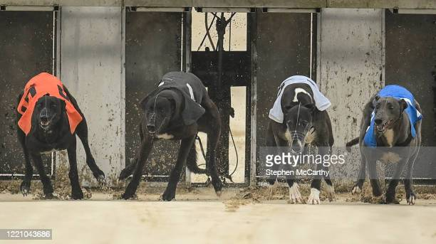 Wexford , Ireland - 18 June 2020; Greyhounds, from left, Falcon Blitz, Longslip Panther, Mottee Glory and Cotswold Inn exit the traps at the start of...