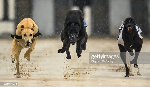 Wexford , Ireland - 18 June 2020; Greyhounds, from left, Lady Primrose, Strictly Honey and Cosy Coyote during The Slan Abhaile Five-2-Five A3 Stakes...