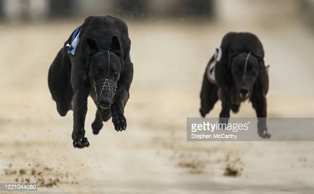 Wexford , Ireland - 18 June 2020; Strictly Honey, left, and Cosy Coyote during The Slan Abhaile Five-2-Five A3 Stakes at Enniscorthy Greyhound...