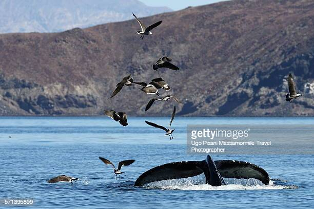 Whale and seagulls