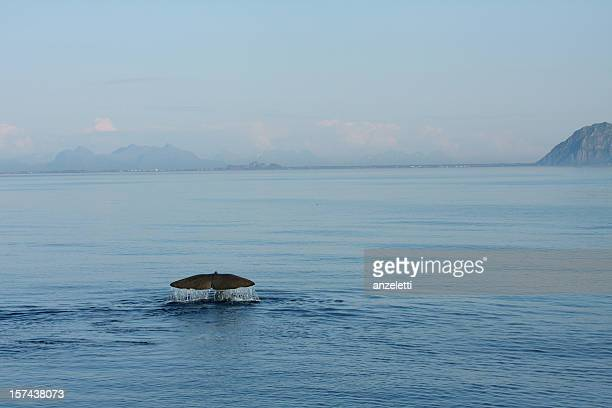 Whale close to coastline