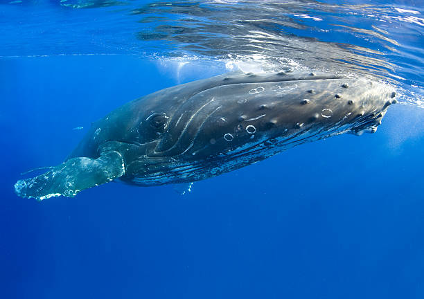 whale close up