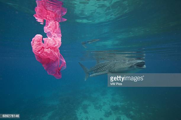 A whale shark swims by while a plastic bag floats around Plastic kills way too much marine life A whale shark swims by a plastic bag Pollution like...