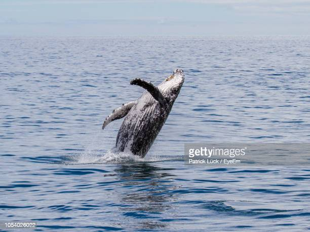 whale swimming in sea against sky - southland new zealand stock pictures, royalty-free photos & images
