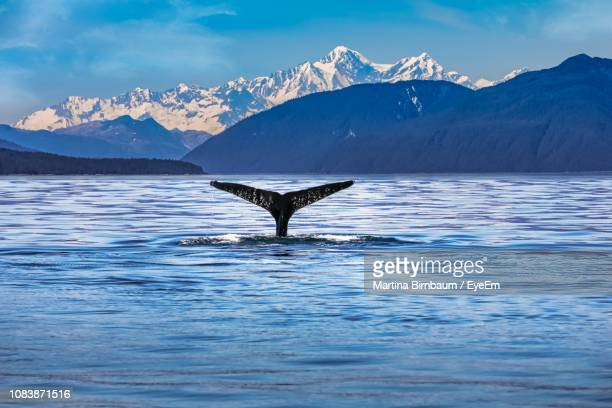 Whale Swimming In Sea