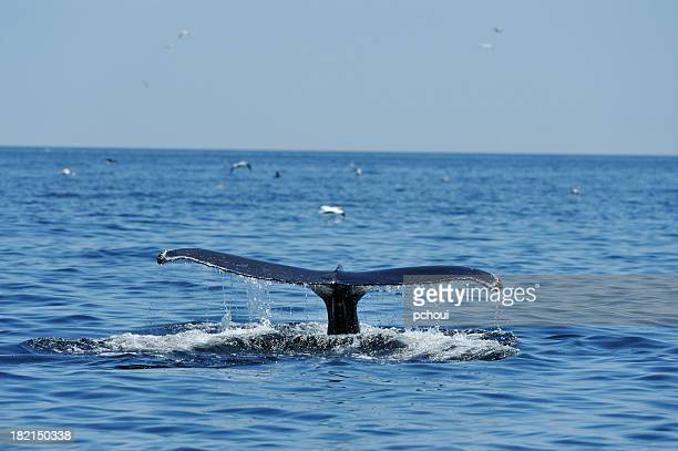 Whale tail fluke in the sea with sea birds around