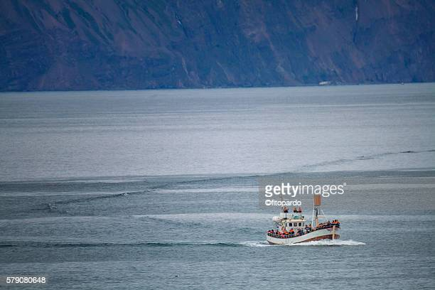 whale watching boat in husavik - husavik stock photos and pictures