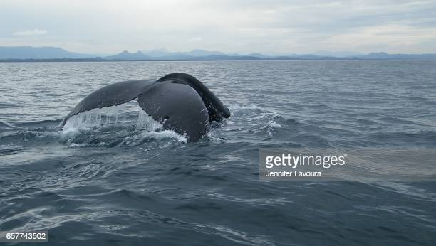 Whale watching in Byron Bay