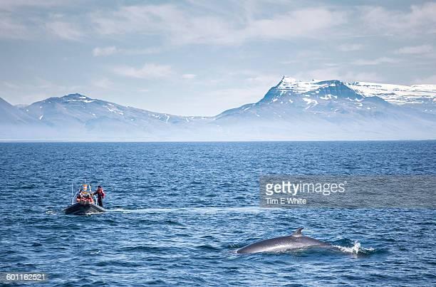 Whale watching near Reykjavik, Iceland