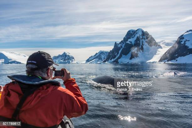 whale watching - antarctic sound foto e immagini stock