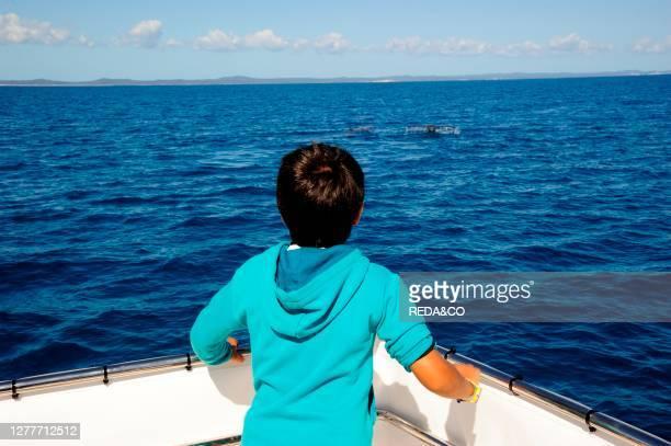 Whale watching with Freedom Whale Watch & Charters www.freedomwhalewatch.com.au, Hervey Bay, Queensland, Australia.