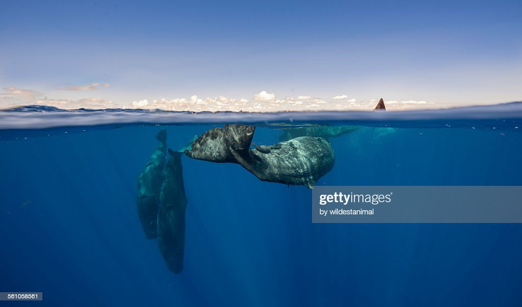 Whales And Clouds : Stock Photo