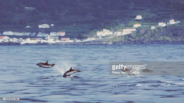 whales swimming in lake - cetacea stock photos and pictures