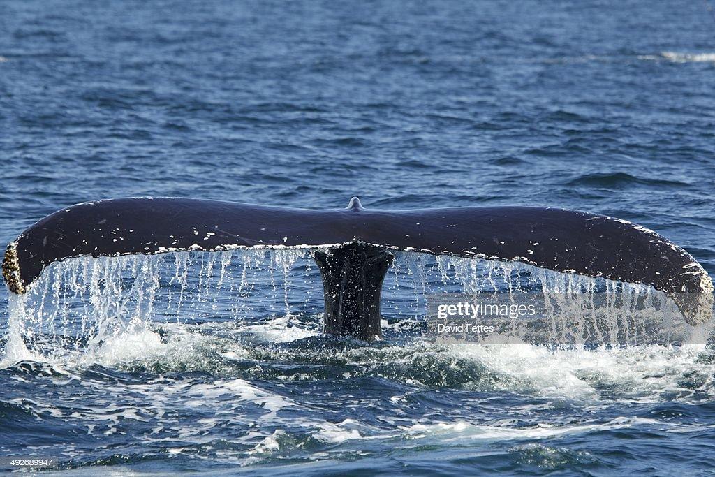 Whale's tail splashing on sea surface : Stock Photo