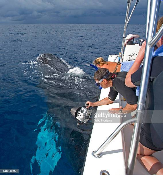 Whalewatchers observe a curious Atlantic humpback whale surfacing alongside a tender boat as a photographer prepares to enter the water Megaptera...
