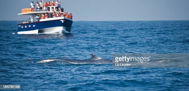 Whale-watching boat with Blue Whale, Mirissa, Sri Lanka