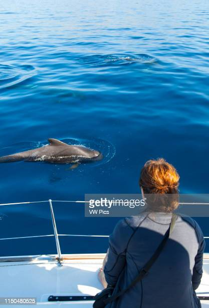 Mother and calf Pilot whales off the coast of Tenerife in the Canary Islands