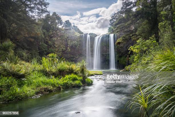 whangarei waterfall, temperate rainforest, whangarei, northland, north island, new zealand - whangarei heads stock-fotos und bilder