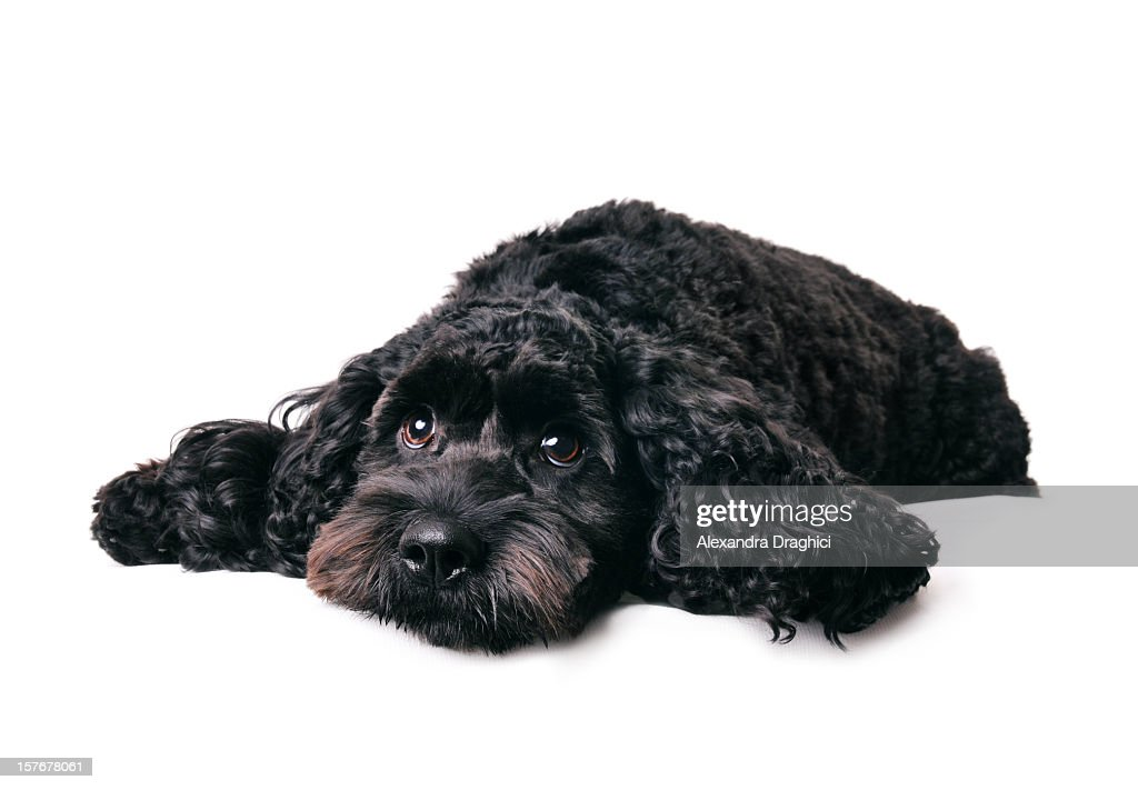 What a dog day... : Stock Photo