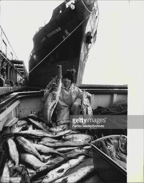 What a Gem', deckhand Colin Price of Manly is saying as he sorts out a large catch of Gem fish which the 68ft trawler 'Vagabond' 'S', caught in one...