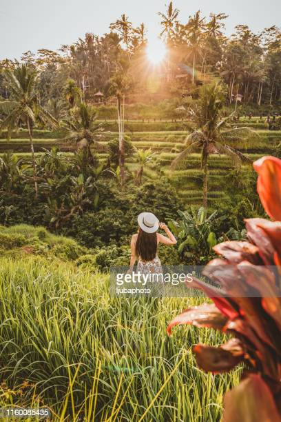 what a view! - tegallalang stock photos and pictures