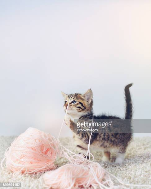 what? i was trying to knit you a sweater - cat family stock pictures, royalty-free photos & images