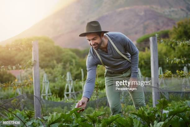 what you put in you get out - agricultural occupation stock photos and pictures