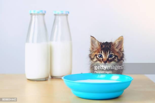 Was auch immer die Frage, die Antwort ist Milch
