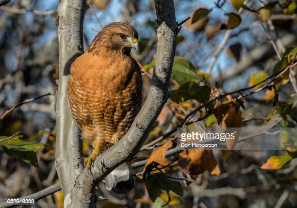 what's below - birds_of_prey stock pictures, royalty-free photos & images