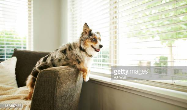 what's going on out there? - dog stock pictures, royalty-free photos & images