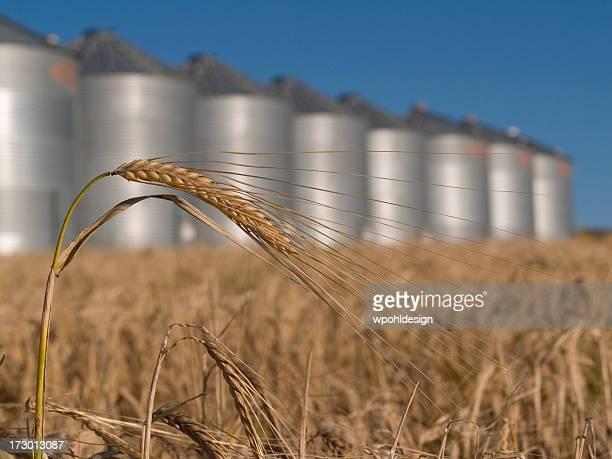 wheat and grain bins
