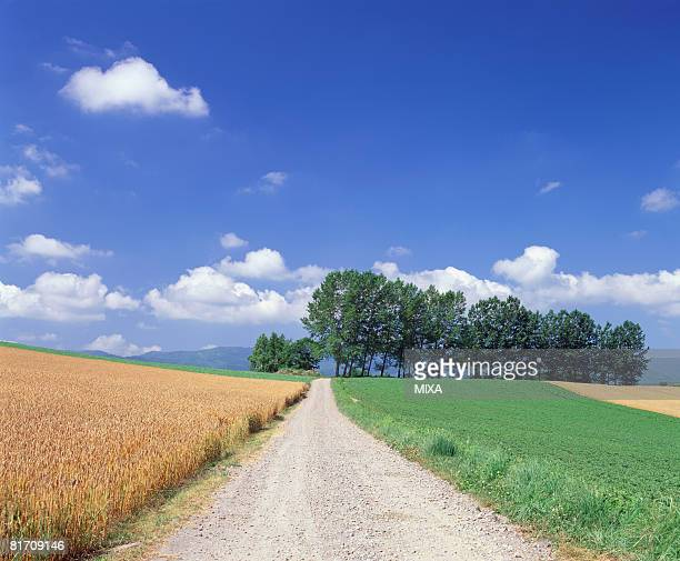 wheat and soybean field, hokkaido, japan - biei town stock pictures, royalty-free photos & images