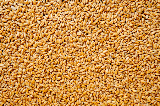 Wheat berries background. 171553200