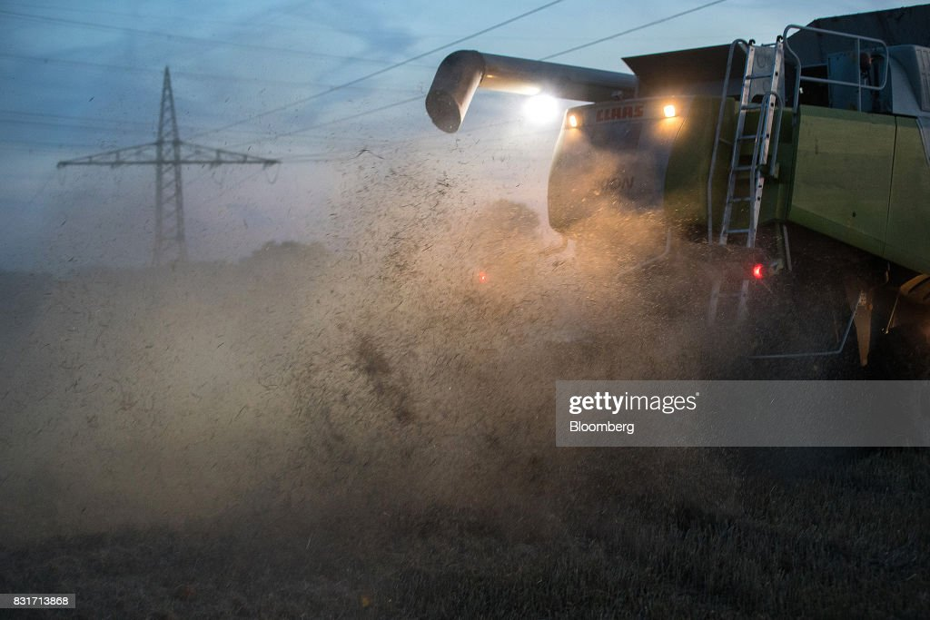 Wheat chaff rises as a Claas KGaA Lexion 600 combine harvester operates in a wheat field in Wustermark, Germany, on Monday, Aug. 14, 2017. In Germany, problems with specific weight and Hagberg, a measure of baking quality, mean as much as 40 percent of wheat may have to go to the animal feed market this year. Photographer: Krisztian Bocsi/Bloomberg via Getty Images